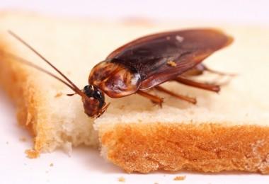 Чем тараканы питаются?