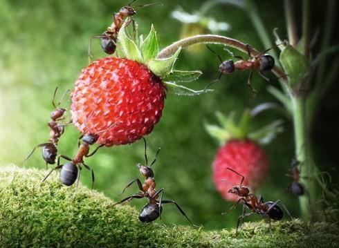 муравьи питание