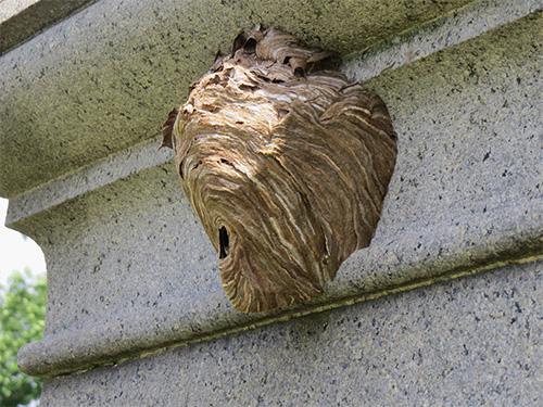 осиное гнездо под карнизом балкона