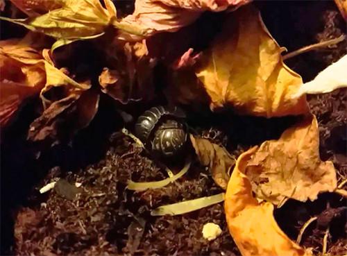 мокрицы в листве