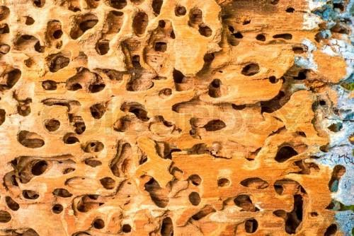 так выглядят дыры от термитов