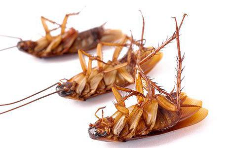 Избавиться от насекомых в доме помогут специальные ловушки