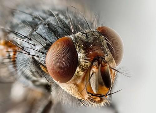Зрение насекомого способно улавливать 250 -300 кадров в секунду