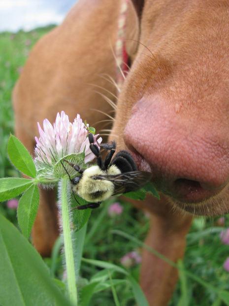 Собаки из-за своего любопытства могут быть укушены насекомыми