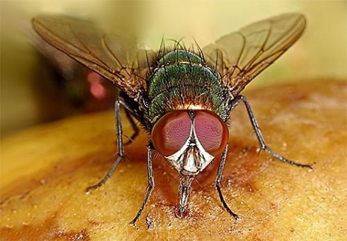 Чтобы насекомые не завелись, нужно принять профилактические меры