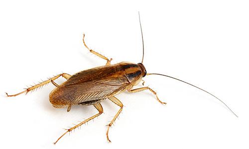 Как выбрать эффективное средство в борьбе с тараканами расскажет данная статья