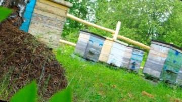 Ульи с пчелами следует располагать вдали от муравейника