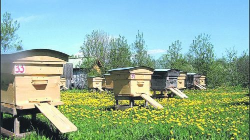 В качестве защиты от насекомых домики ставят на ножки, которые обматывают скользким материалом