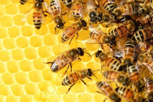 Пчелы летают стаями, собирая нектар с растений