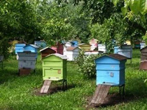 Домашние пчелы строят ульи в домиках