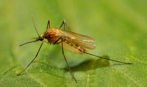 В мире насчитывается около 3000 видов этих насекомых