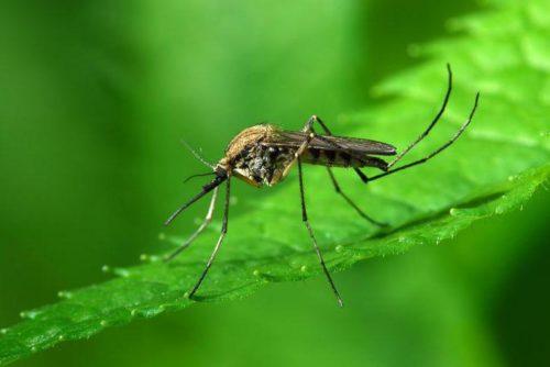 Комары предпочитают селиться около стоячей воды