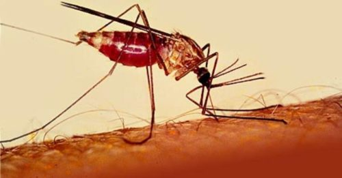 Насекомые являются переносчиками многих болезней