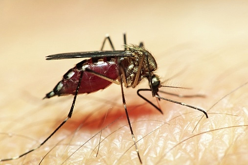 Маска комара своими руками фото 122