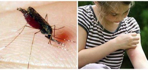 Больше всего от укусов насекомых страдают дети