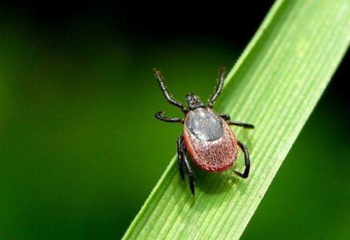 В природе насекомые предпочитают находиться в траве