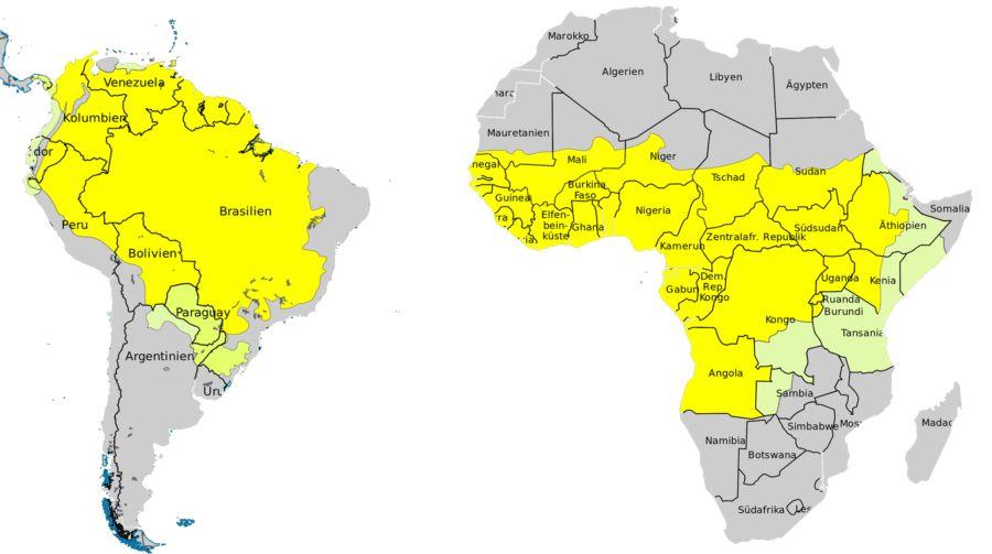 карта распространения желтой лихорадки