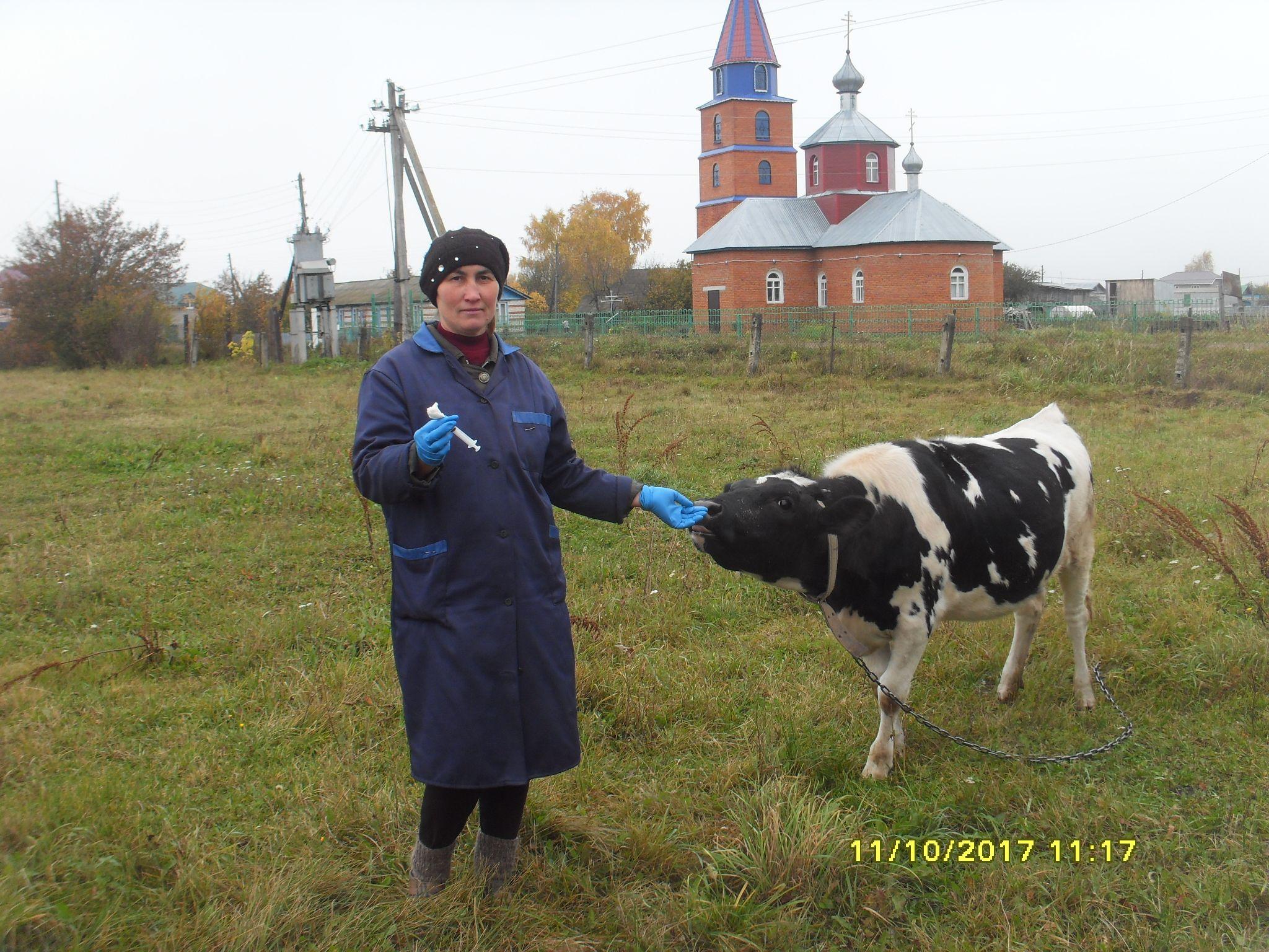 овод и коровы защита