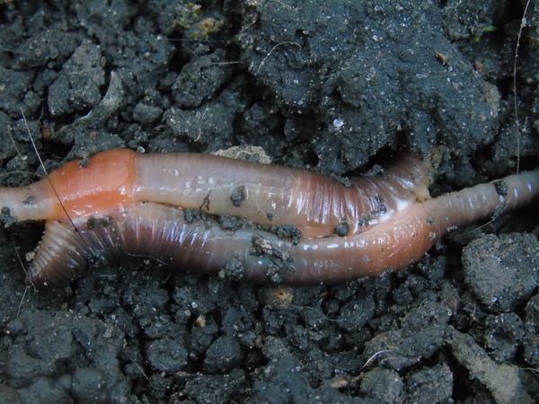 фобия черви отвращение
