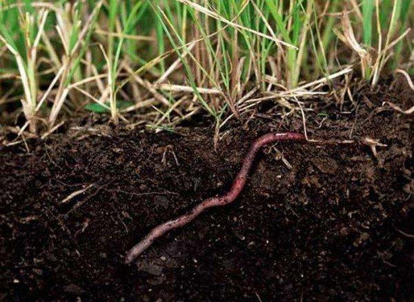 фобия черви причины