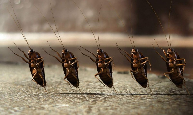 боязнь тараканов фобия
