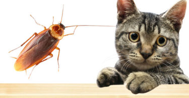 ест ли их кошка