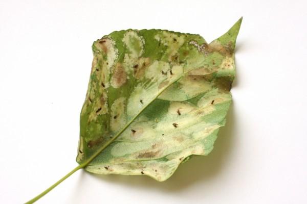 лист поврежденный молью