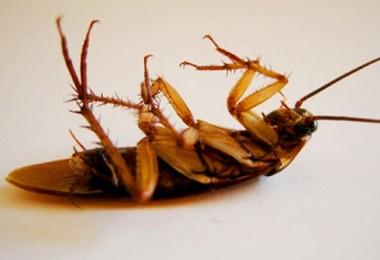 Уничтожение тараканов холодным и горячим туманом