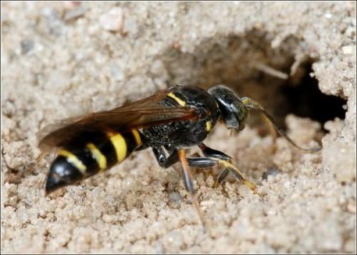 В доме поселились осы как избавиться от назойливых насекомых