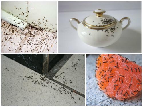 муравьи чем опасны