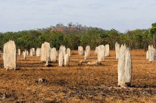 Термитники в австралии