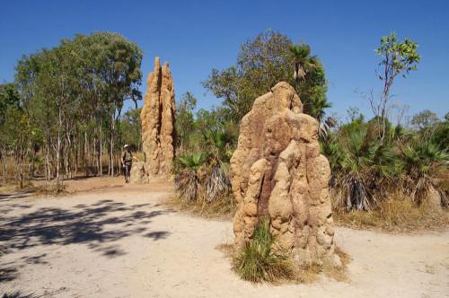 гнезда термитов