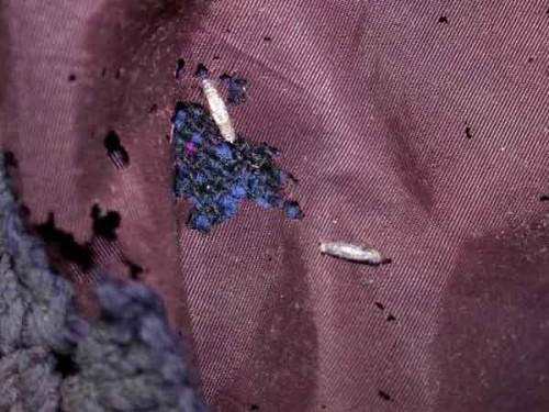 одежда изьеданная платяной молью