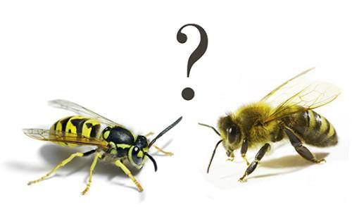 оса и пчела