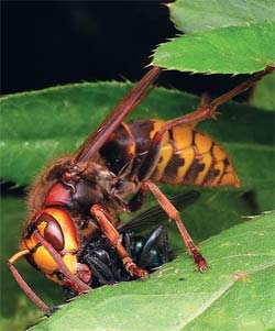 поимка насекомого