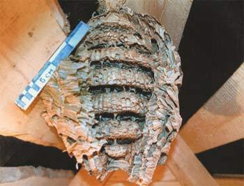 Покинутое гнездо в разрезе