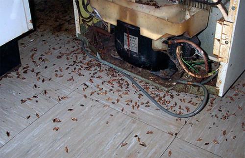 тараканы могут испортить приборы