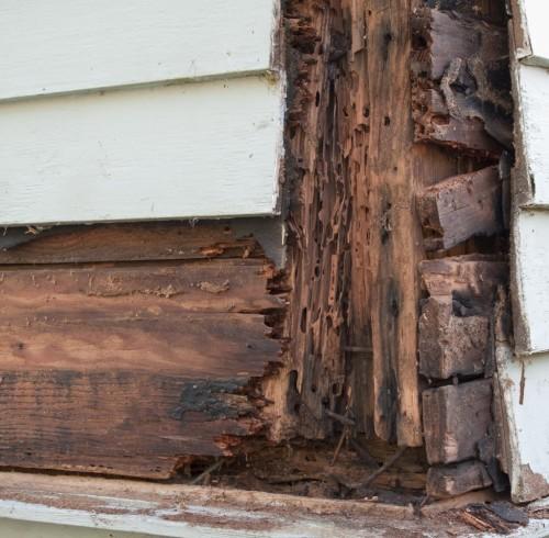 термиты повредили угол дома