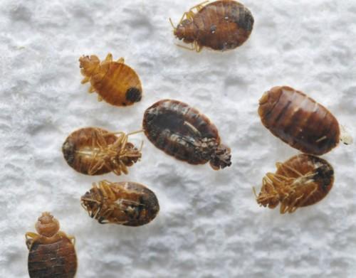 Препарат действует на насекомых смертельно
