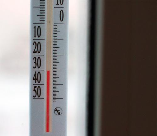 Насекомые боятся мороза и сильной жары