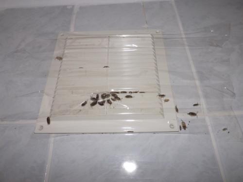 Насекомые могут проникнуть в жилище человека через вентиляцию