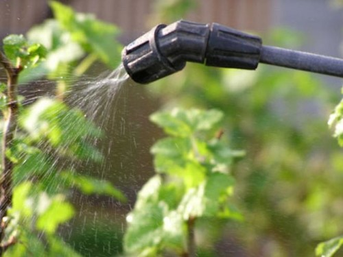 Растения можно обработать водным раствором
