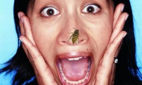 Что нужно делать при укусе насекомого расскажет данная статья
