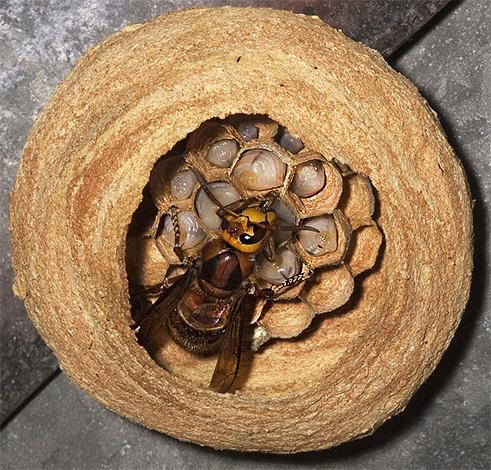 матка гнездо