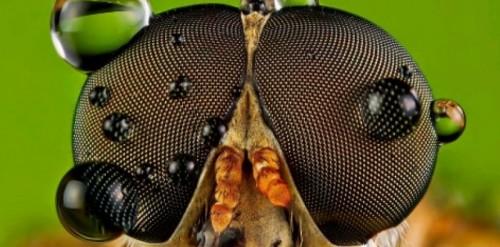 Так выглядят глаза насекомого под микроскопом