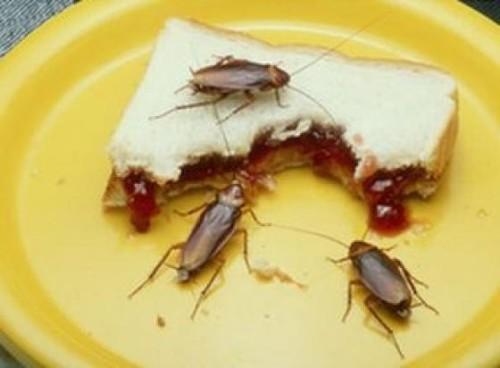 Насекомые неприхотливы в еде