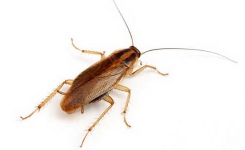 Обнаружив насекомых в доме, нужно принять меры по их уничтожению