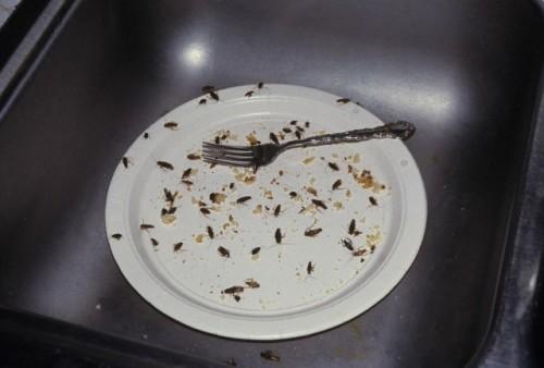 Если еда и вода будут в доступе - насекомое вряд ли покинет ваше помещение