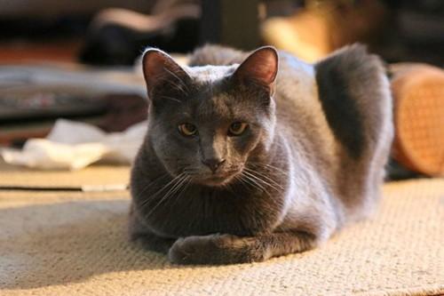 Как помочь кошке, если ее укусила оса