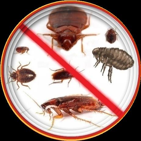 Препарат является универсальным средством против насекомых